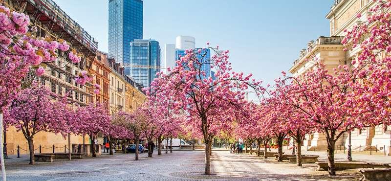 CityGames FFM: Kirschblüten im frankfurter Stadtkern